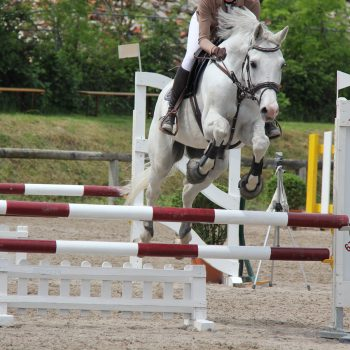 Pferd springt über Hindernis